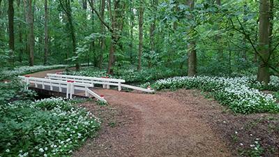 Mind Walk zijn meditatieve wandelingen in de natuur, mindful wandelen